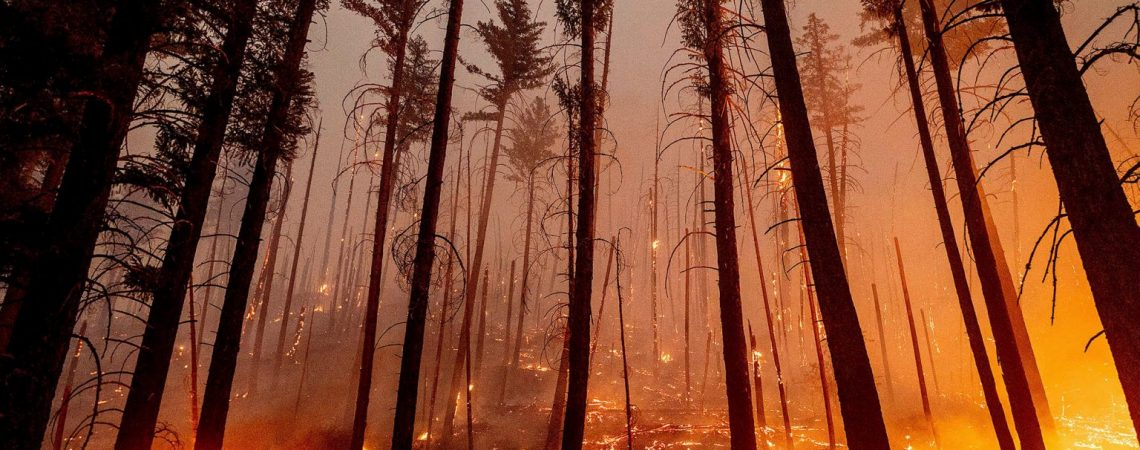Historic wildfires in western US force 'critical resource limitations' as 21K battle blazes